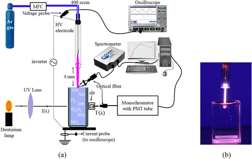 Scavenging effects of ascorbic acid and mannitol on hydroxyl radicals generated inside water by an atmospheric pressure plasma jet