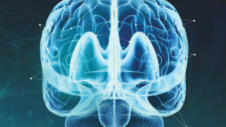 The Neuroscience Network